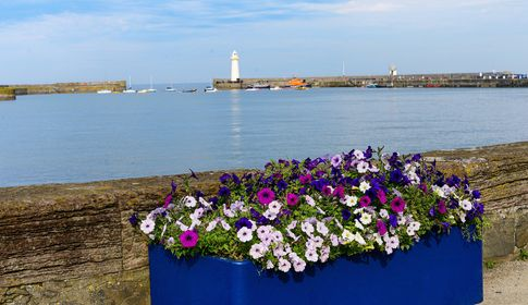 Floral Guide To Donaghadee 21